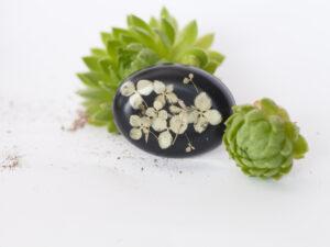 zalioji-hortenzija-sage