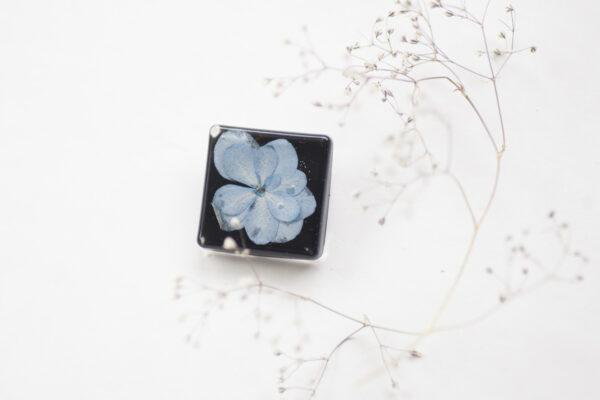 melyna-hortenzija